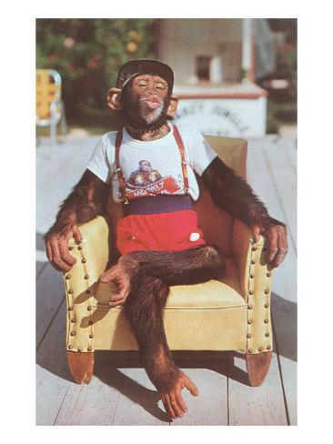Chimp sitting in armchair poster at for Sitting in armchair