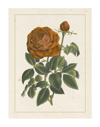 Chinese Red Rose II Giclee Print