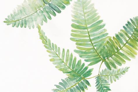 Ferns I Square Art Print