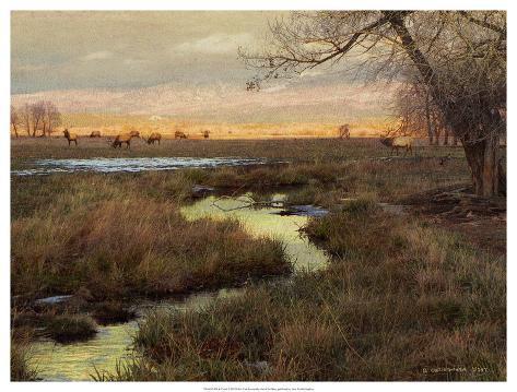Elk & Creek Art Print