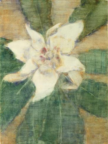 Magnolia Grandiflora Giclee Print