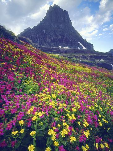 Wildflowers in Summer, Glacier National Park, Montana, USA Photographic Print