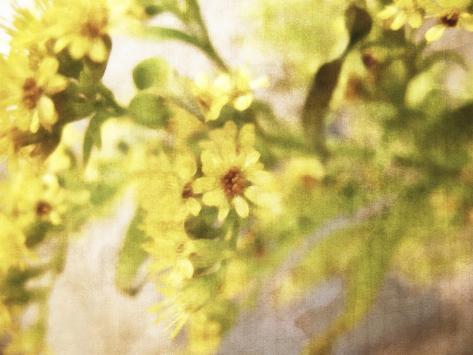 A Sensitive Sort of Beauty Giclee Print