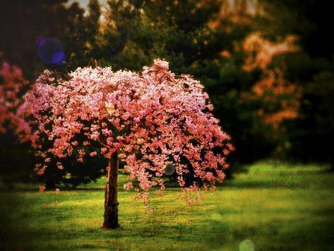 Plant a Hope Giclee Print