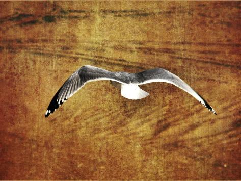Thrill of Flying Giclee Print