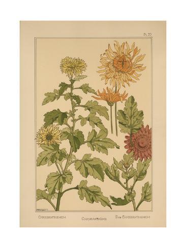 Chrysanthemum Giclee Print