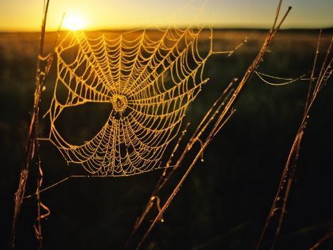 Spider Web at Sunrise, Fort Niobrara National Wildlife Refuge, Nebraska, USA Photographic Print