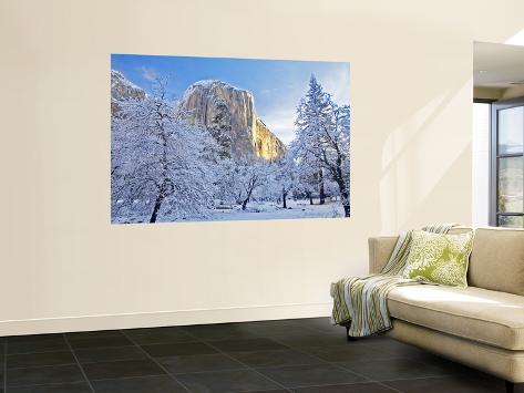 Sunrise Light Hits El Capitan Through Snowy Trees in Yosemite National Park, California, USA Wall Mural