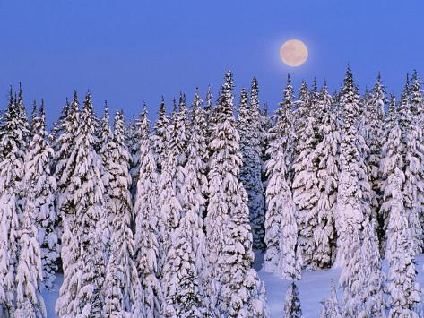 Moon Over Snow-Covered Trees Photographic Print