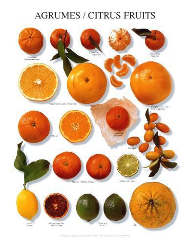 Citrus Fruit Art Print