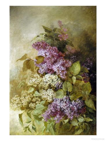 Study of Lilac Giclee Print