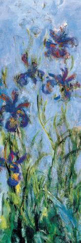 Irises (detail) Stretched Canvas Print