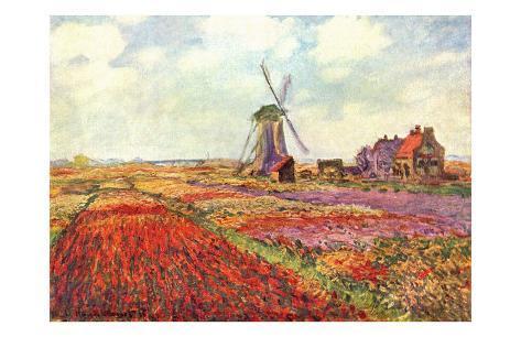 Tulips in Holland Framed Art Print
