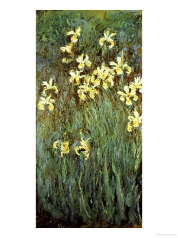Yellow Irises Giclee Print