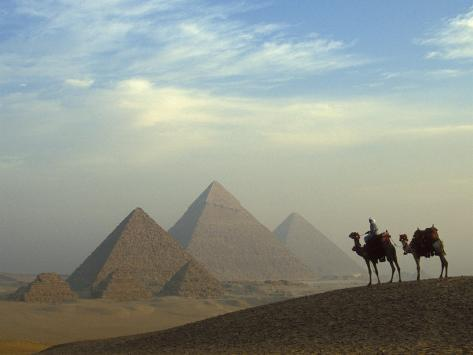 Camels and Driver at the Pyramids Complex, Egypt Photographic Print
