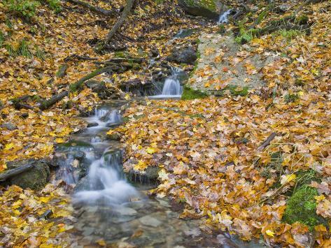 Small Stream with Fall Leaves, Malanaphy Springs State Preserve, Winneshiek County, Iowa, USA Photographic Print