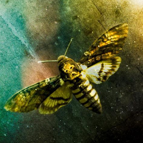 Moth Moments Photographic Print