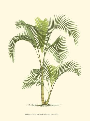 Coastal Palm IV Art Print