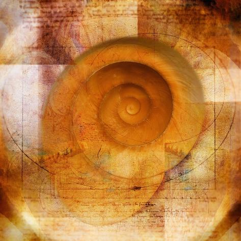Snail Shell and Handwriting Fotoprint
