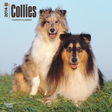 Collies - 2014 Calendar Calendars