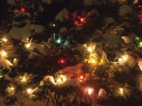 Colorful Christmas Fairy Lights on a Snow Covered Evergreen Tree Photographic Print