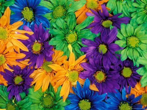 Colorful Daisy Collage, Washington, USA Photographic Print