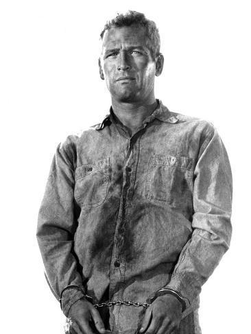 Cool Hand Luke, Paul Newman, 1967 Photo