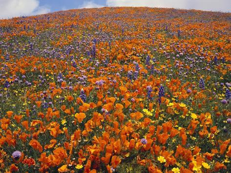 Blooming Wildflowers Valokuvavedos