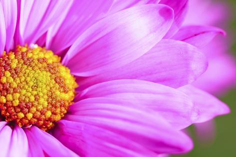 Close-Up of Wildflower Valokuvavedos