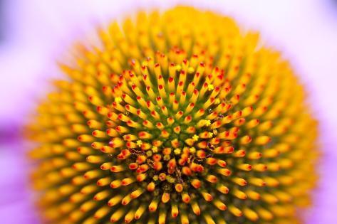 Closeup of a Flower Valokuvavedos