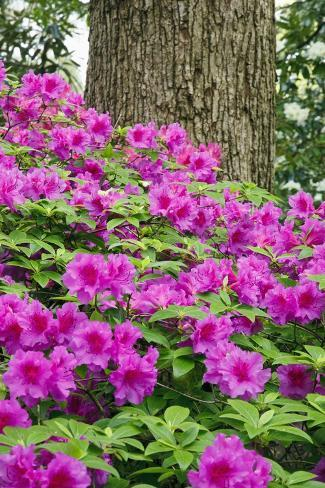Crystal Spring Rhododendron Gardens in Portland, Oregon Valokuvavedos