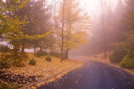 Fall Colors Along Country Road Valokuvavedos