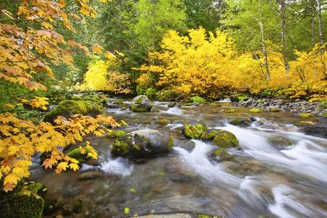 Fall Colors Along Santiam River, Willamette National Forest, Oregon Cascades, Pacific Northwest Valokuvavedos