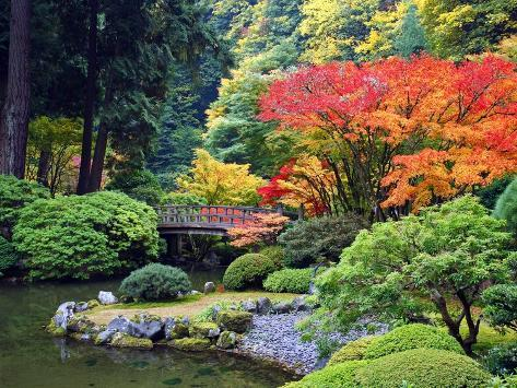 Fall Colors at Portland Japanese Gardens, Portland Oregon Photographic Print