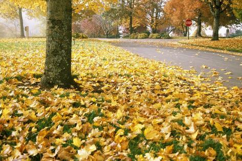 Fall Leaves Along Country Road Valokuvavedos