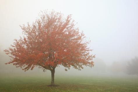 Fall Trees in the Fog Valokuvavedos