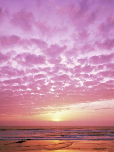 Pink Sunset Over Heceta Beach Photographic Print