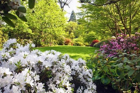 Spring flowers in crystal springs rhododendron garden portland oregon usa photographic print for Crystal springs rhododendron garden