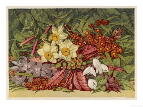 Cultivated and Wild: Hyacinthus Giclee Print
