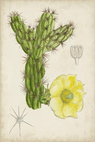Antique Cactus I Stampa artistica