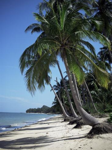 white sandy beach and leaning palm trees koh samui thailand