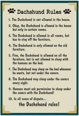 Dog House Rules