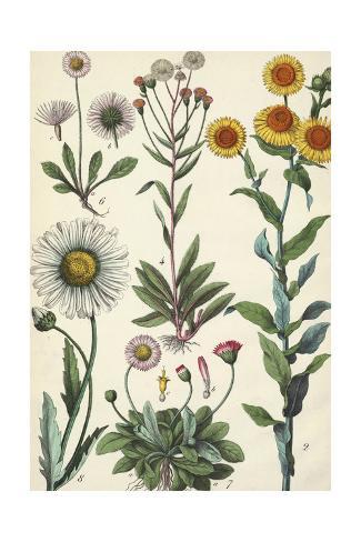 Daisies and Dandelions Art Print