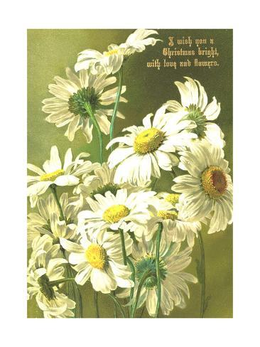 Daisies and Stems Art Print