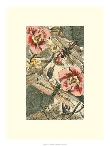 Dancing Dragonfly II Giclee Print