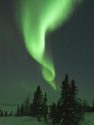 Aurora Borealis in Canada's Wapusk National Park Photographic Print