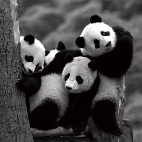 Panda Stampa artistica