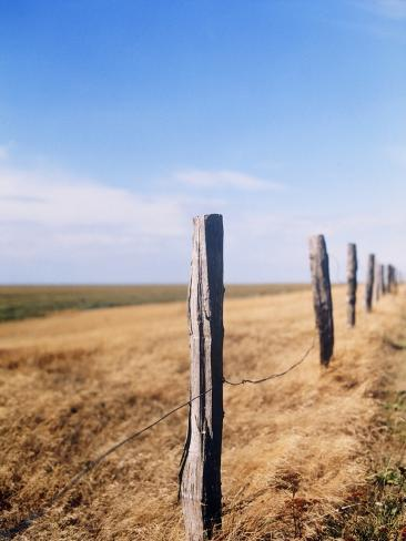 Wooden fence on meadow, St Peter-Ording, Germany Stretched Canvas Print
