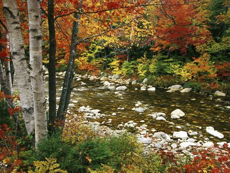 Swift River with Aspen and Maple Trees in the White Mountains, New Hampshire, USA Photographic Print