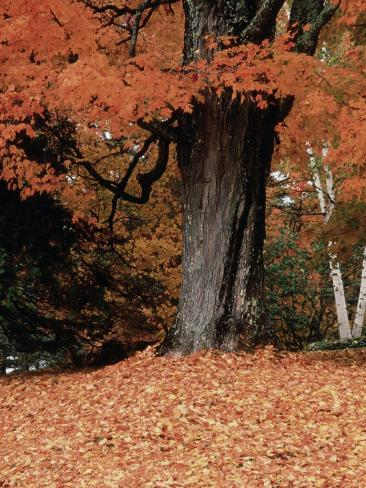 Fall Foliage, Vermont Photographic Print